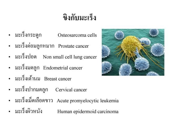 ขิงยับยั้งมะเร็ง