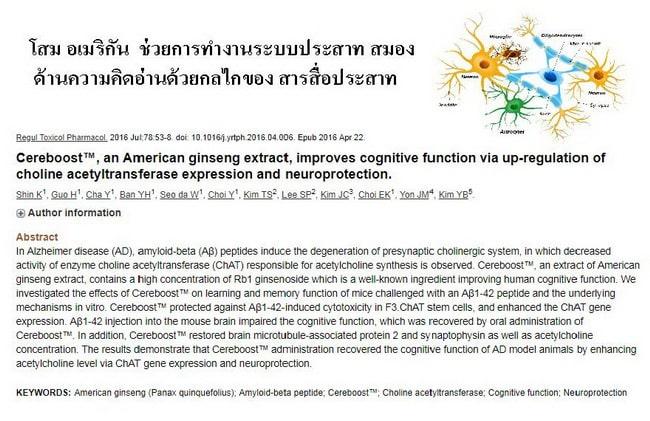 โสมอเมริกัน ช่วยการทำงานของระบบประสาทและสมอง