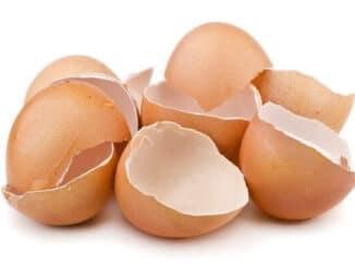 ผงเยื่อหุ้มเปลือกไข่
