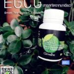 อีจีซีจี กิฟฟารีน EGCG สารสกัดจากชาเขียว