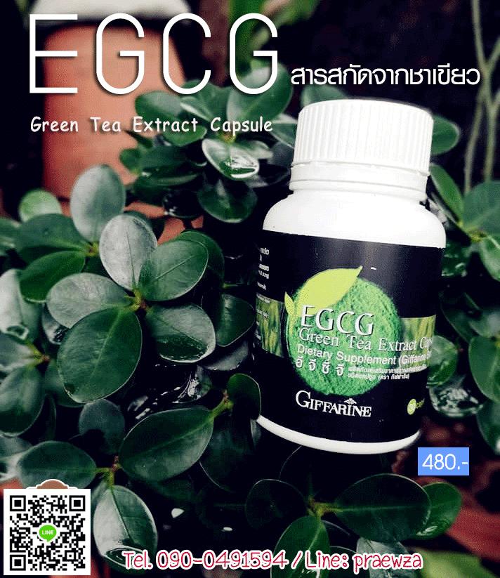 อีจีซีจี กิฟฟารีน, EGCG กิฟฟารีน, ชาเขียว กิฟฟารีน, ต้านมะเร็ง กิฟฟารีน, สารสกัดจากชาเขียว, ลดน้ำหนัก กิฟฟารีน, ป้องกันหัวใจขาดเลือด