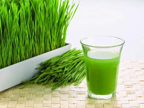 วีทกราส (Wheat grass)