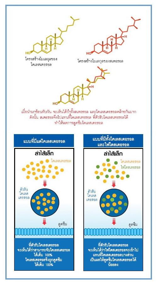 โครงสร้างโมเลกุลของโคเลสเตอรอล